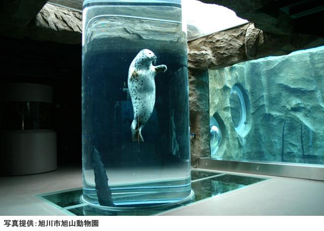 画像引用_旭川動物園の行動展示風景